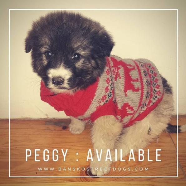 Peggy Bansko Street Dogs Bulgaria