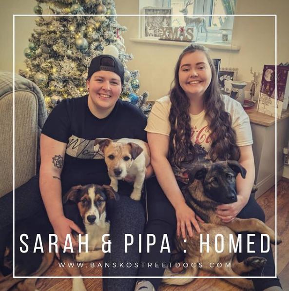 Pipa & Sarah Bansko Street Dogs Bulgaria Homed