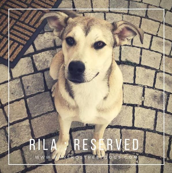 Rila Bansko Street Dogs Reserved Bulgaria