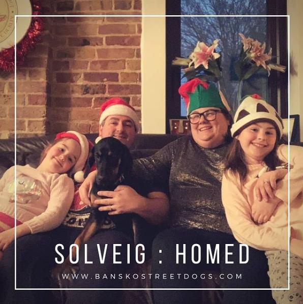 Solveig Bansko Street Dogs homed