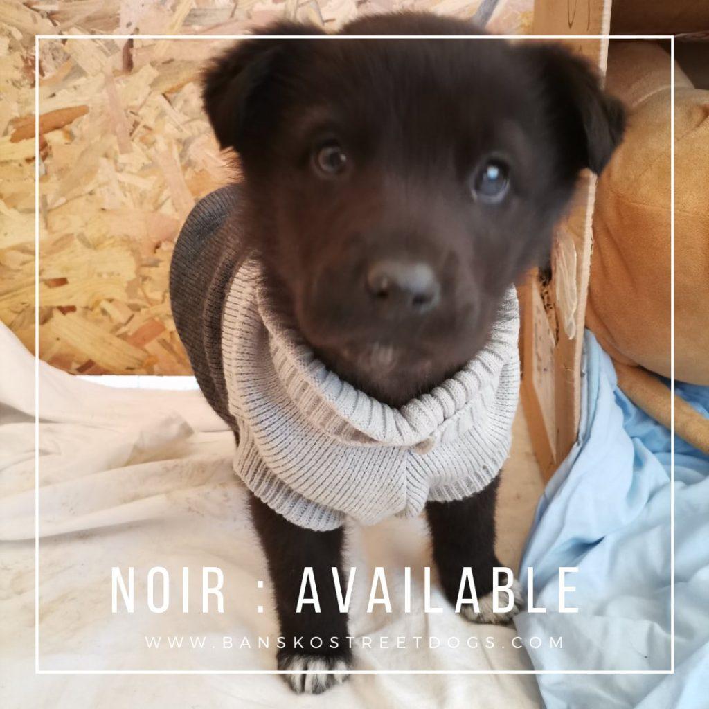 Noir Bansko Street Dogs Bulgaria