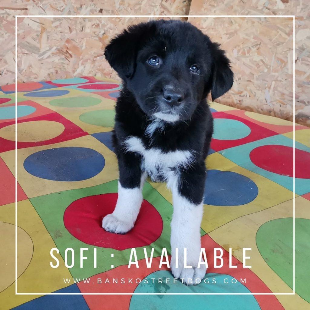 Sofi The Fake Patchlings Bansko Street Dogs Bulgaria